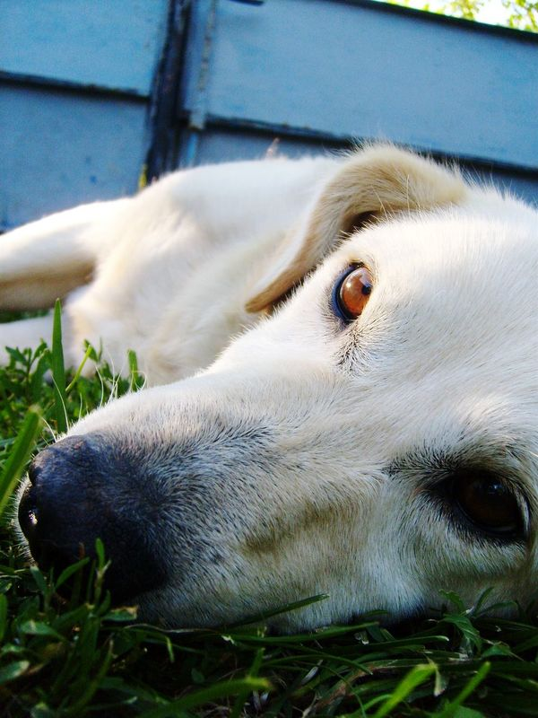 Doggie Doggieselfie Relaxing Relax Brown Eyes