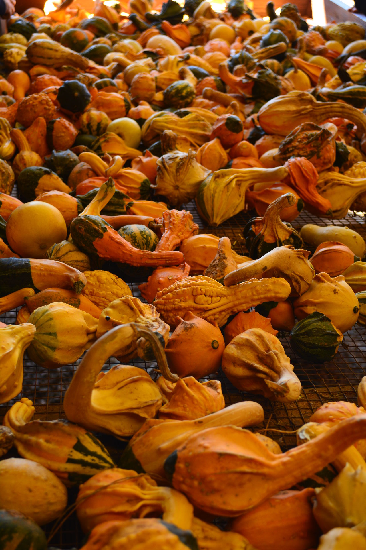 Abundance Autumn Backgrounds Close-up Day Dried Fruit Food Freshness Full Frame Healthy Eating Large Group Of Objects Market No People Orange Color Outdoors Pumpkin Vegetable