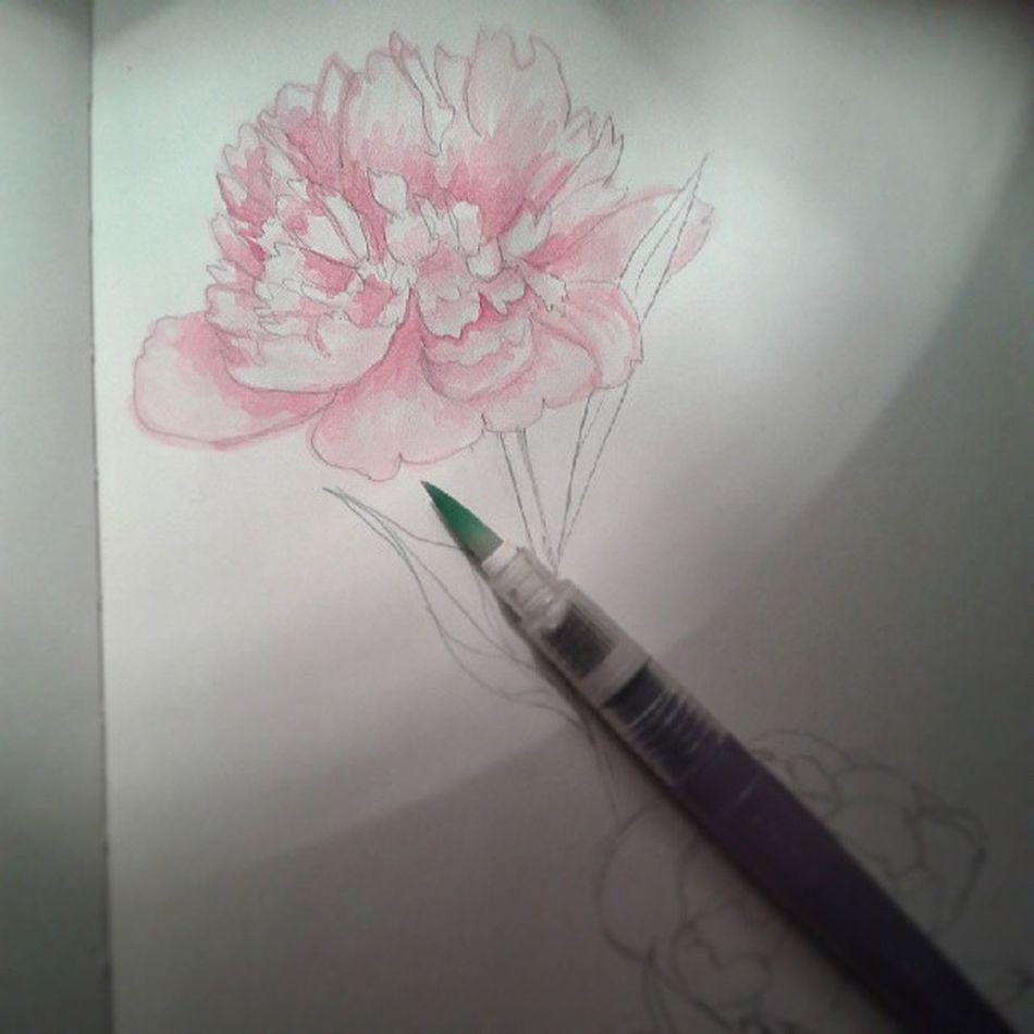 Watercolouring peonies ♡♡♡. Watercolouring Painting Drawing Peonies pink