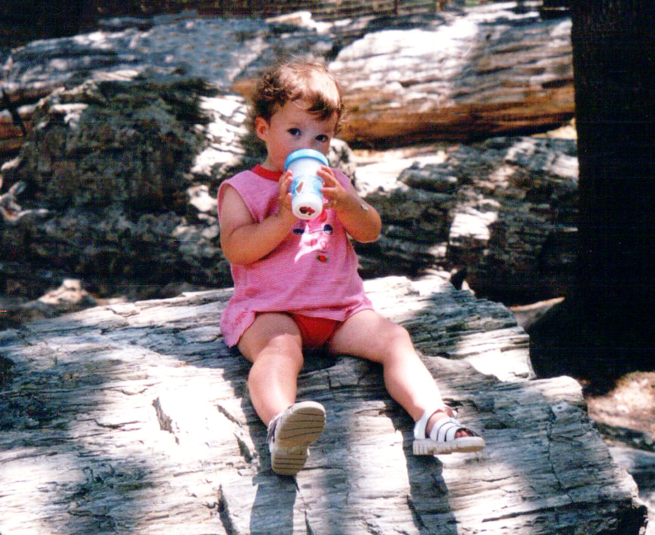 A toddler girl in pink sits on a large petrified tree trunk, having a drink from her cup, in the Petrified Forest in California. Baby California Childhood Day Drink Drinking Forest Nature Outdoor Activities Outdoors Petrified Forest Pink Color Real People Sitting Sunlight Sunlight And Shadow Taking A Break Water
