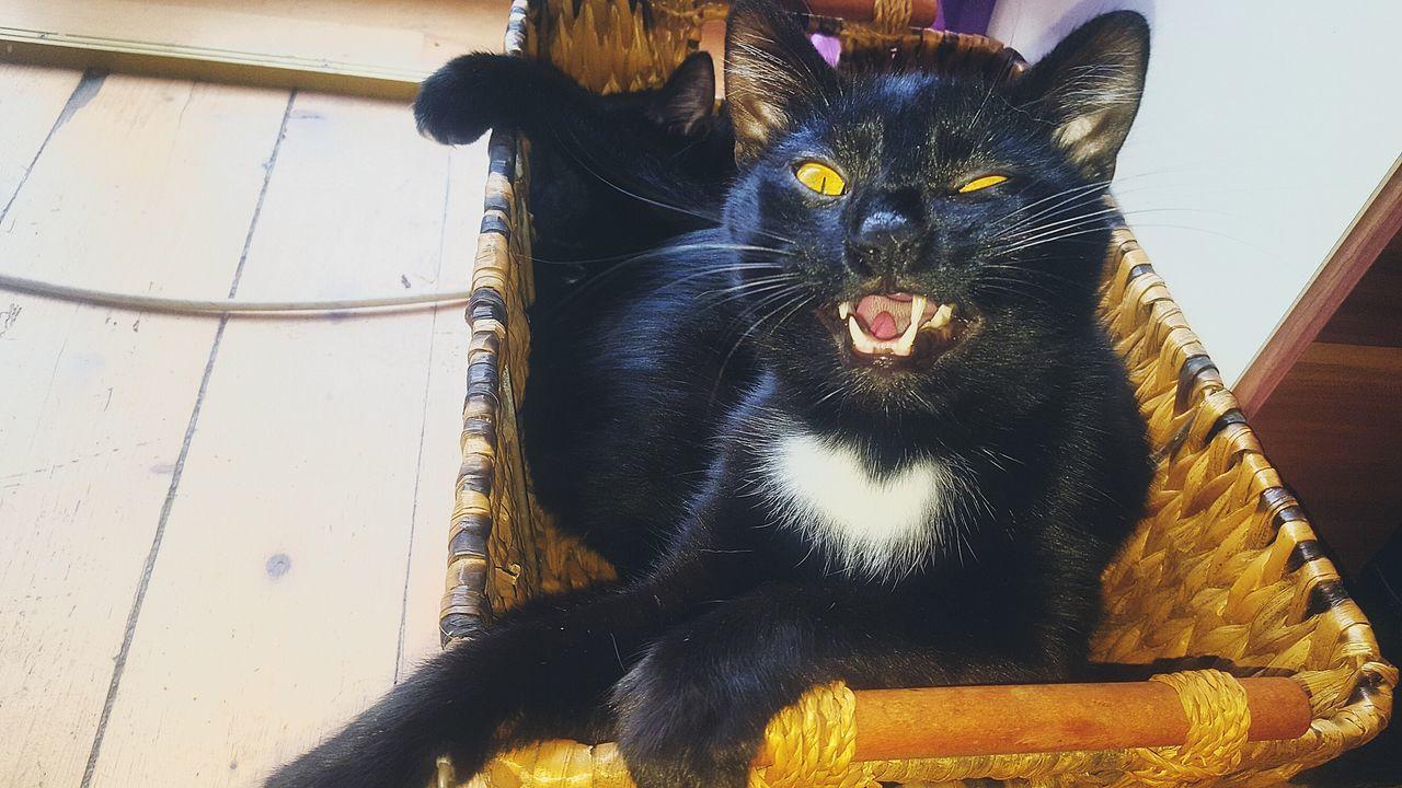 Mybabyboy❤️❤️❤️❤️ Simba SIMBA THE LION Cat♡ Cat Lovers Blackcats Cat Eyes Lovehim