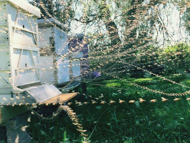 Time Lapse Long Exposure Bees Beehive Coming And Going Taking Photos Check This Out