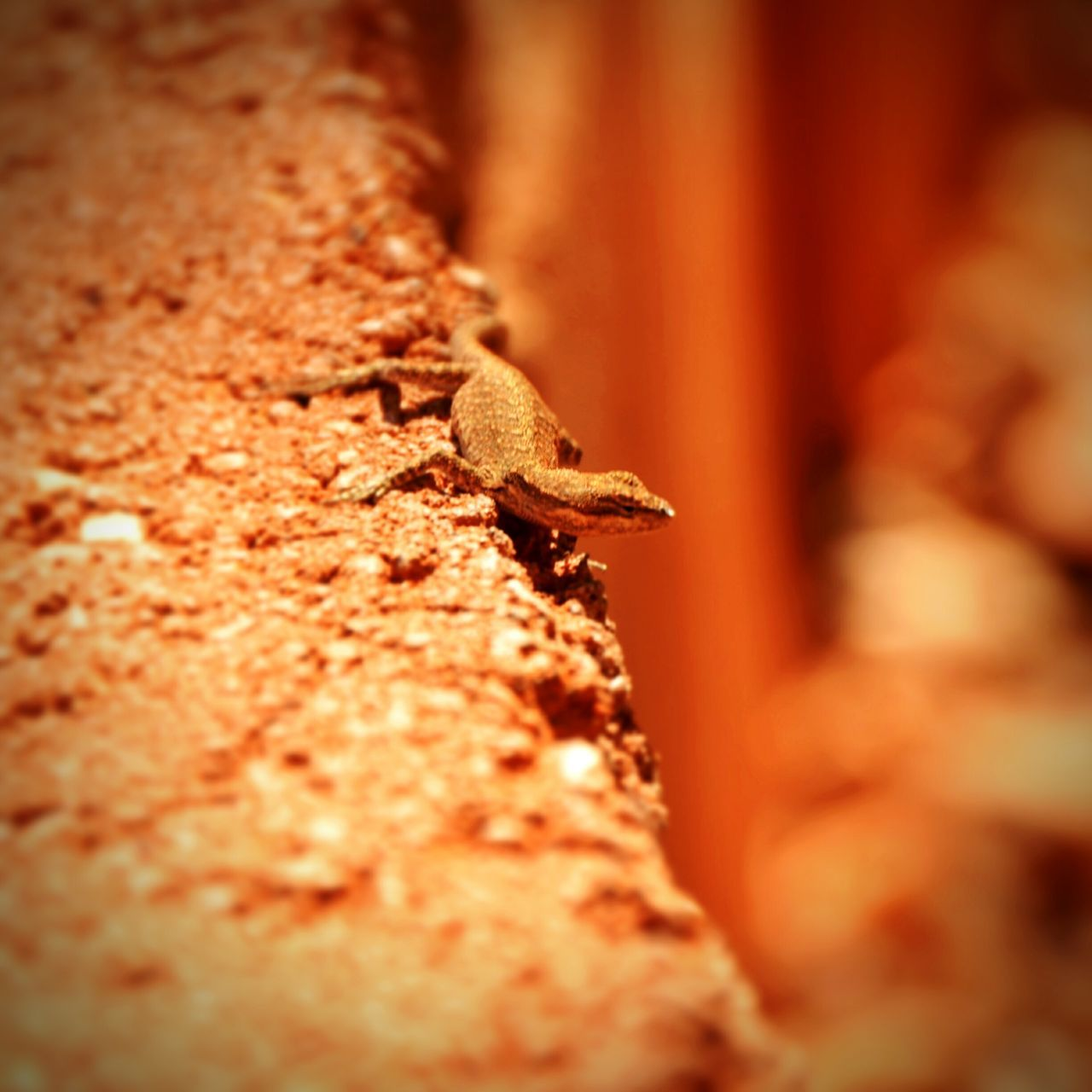 Animal Themes Animals In The Wild Animal Wildlife No People Outdoors One Animal Lizards Lizard Watching Lizard Close Up Day Close-up Nature Lizard Photography Lizard Nature lizard cuteness First Eyeem Photo