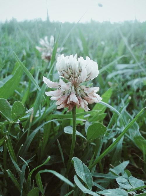 I shoot only on mobile Nature Mushishi Green Flowers Grass Flower Ginko Grassy Japan Art Scenery Ginko Mushishi Clover