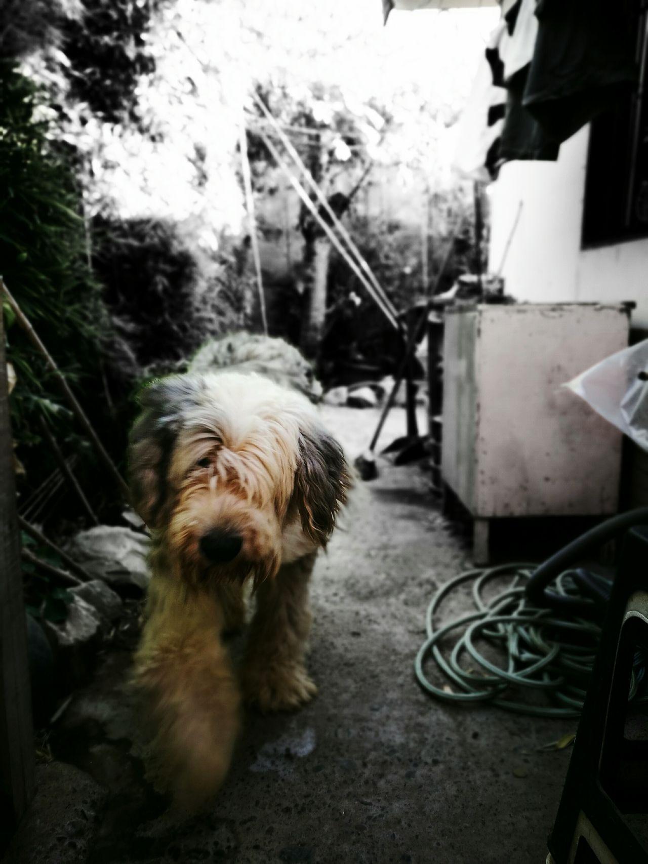 El pequeño gigante.... Polo Dog First Eyeem Photo