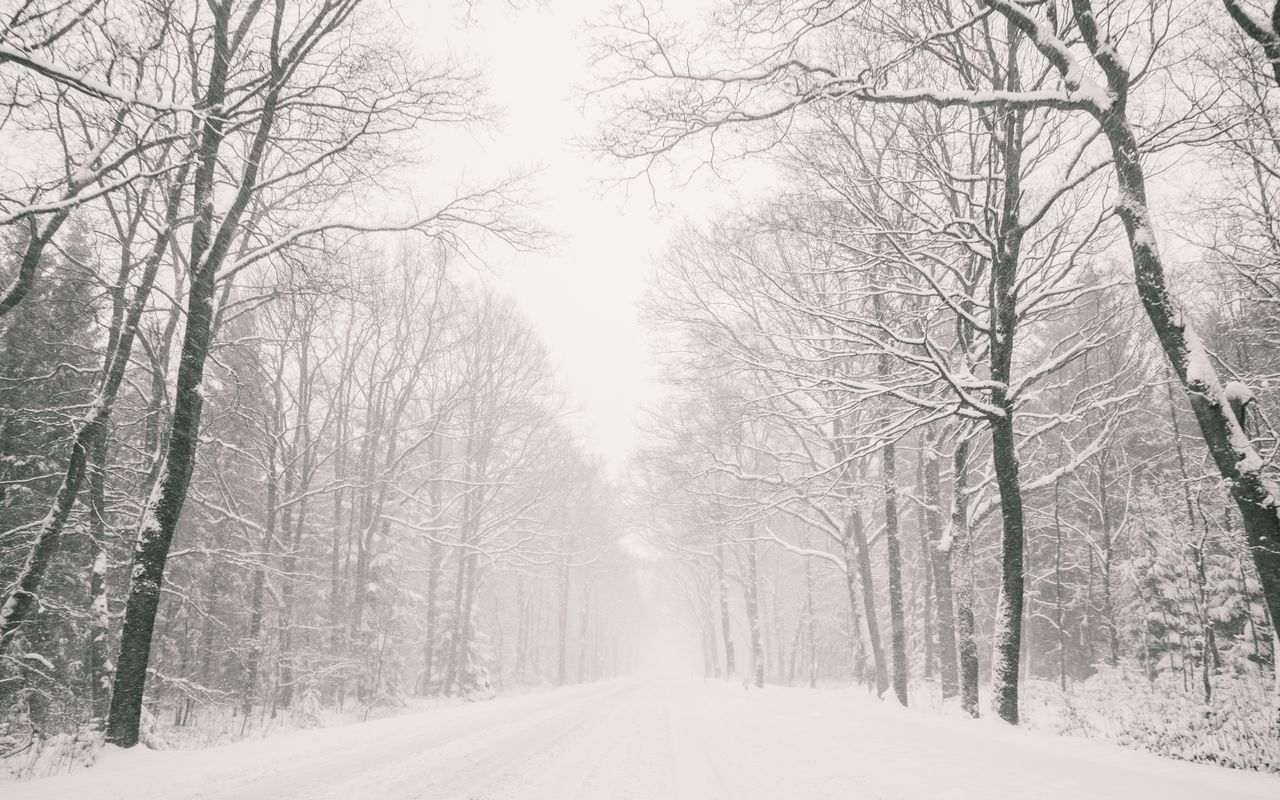 bare tree, snow, winter, cold temperature, nature, tree, weather, tranquility, beauty in nature, branch, tranquil scene, day, outdoors, the way forward, no people, road, scenics, landscape, sky