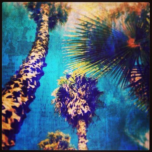 Palmtrees HighlandPark
