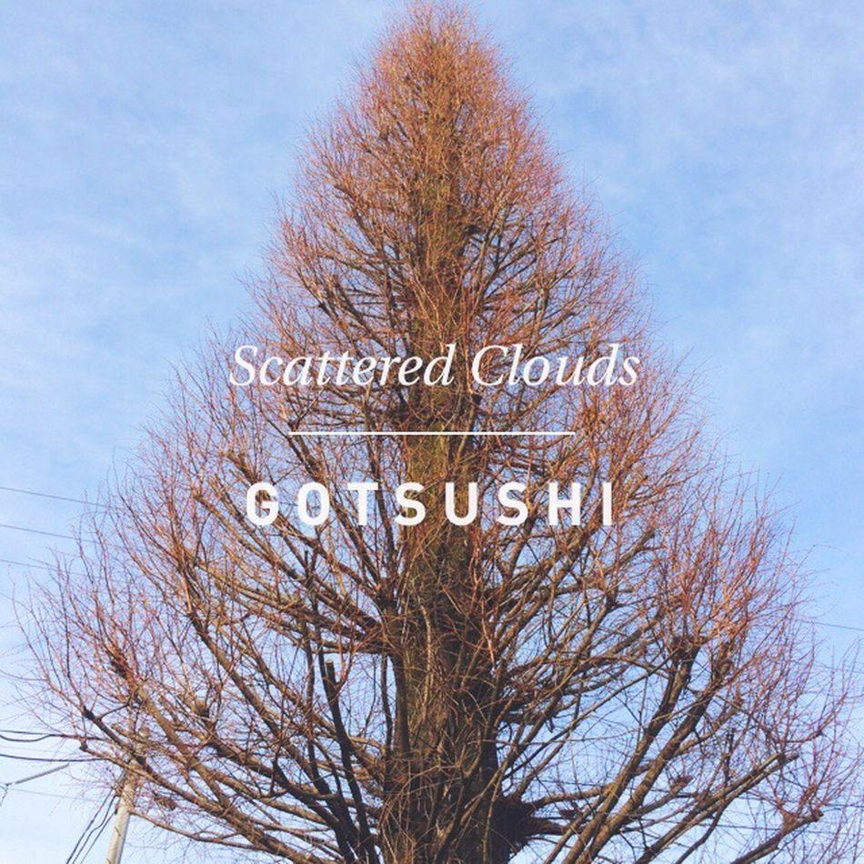 雨上がりすっかり春陽気 Tree Trees Nature Nature_collection