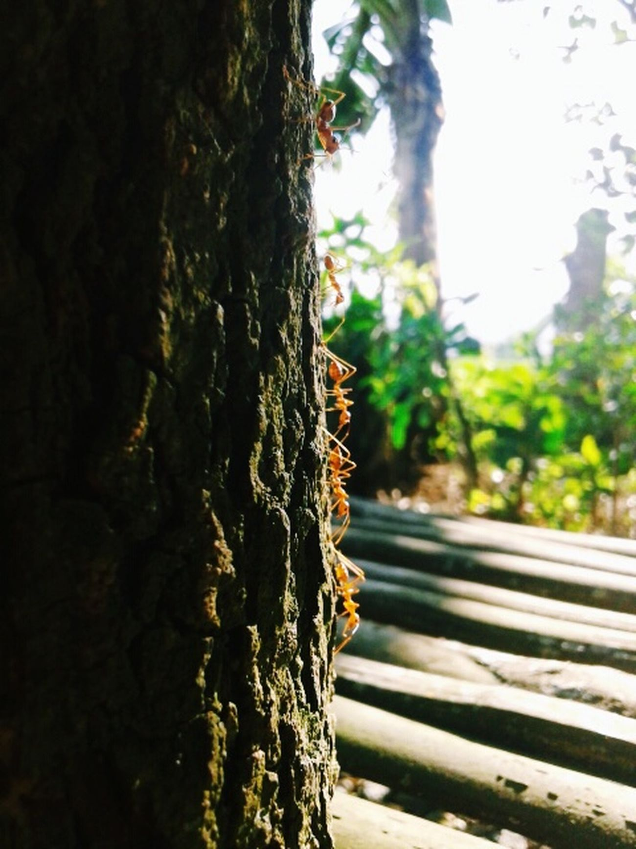 ants are the most hardworking insects Antsmarching Antsveiw Check This Out Eyemnaturelover