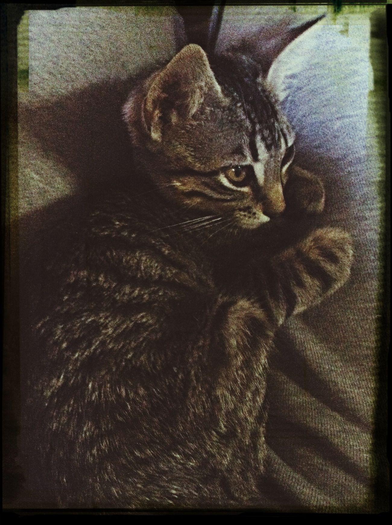 Tigerlili Sundaymorning Keepcool