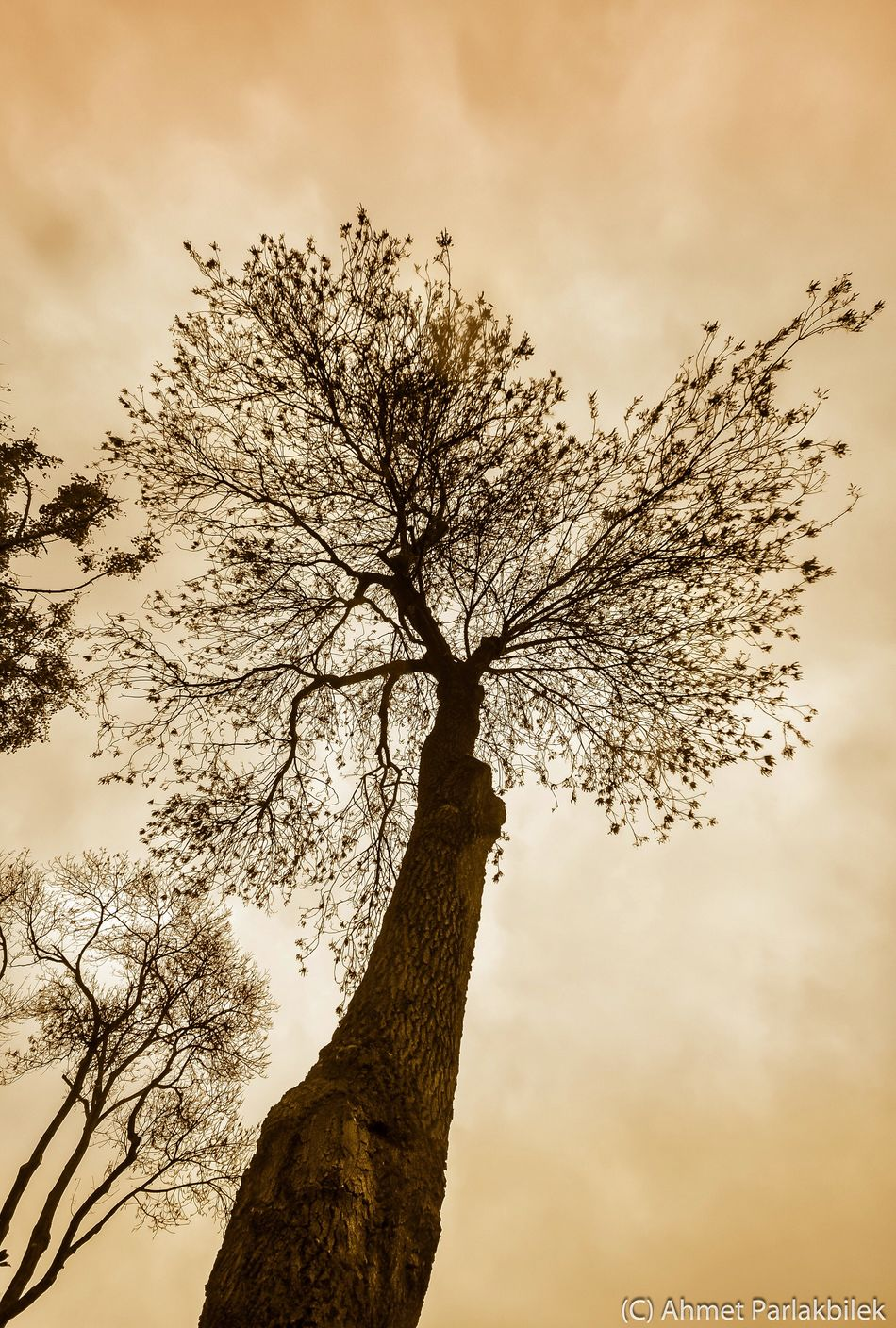 Tree Sky Nature Low Angle View No People Cloud - Sky Growth Outdoors Scenics Branch Beauty In Nature Day