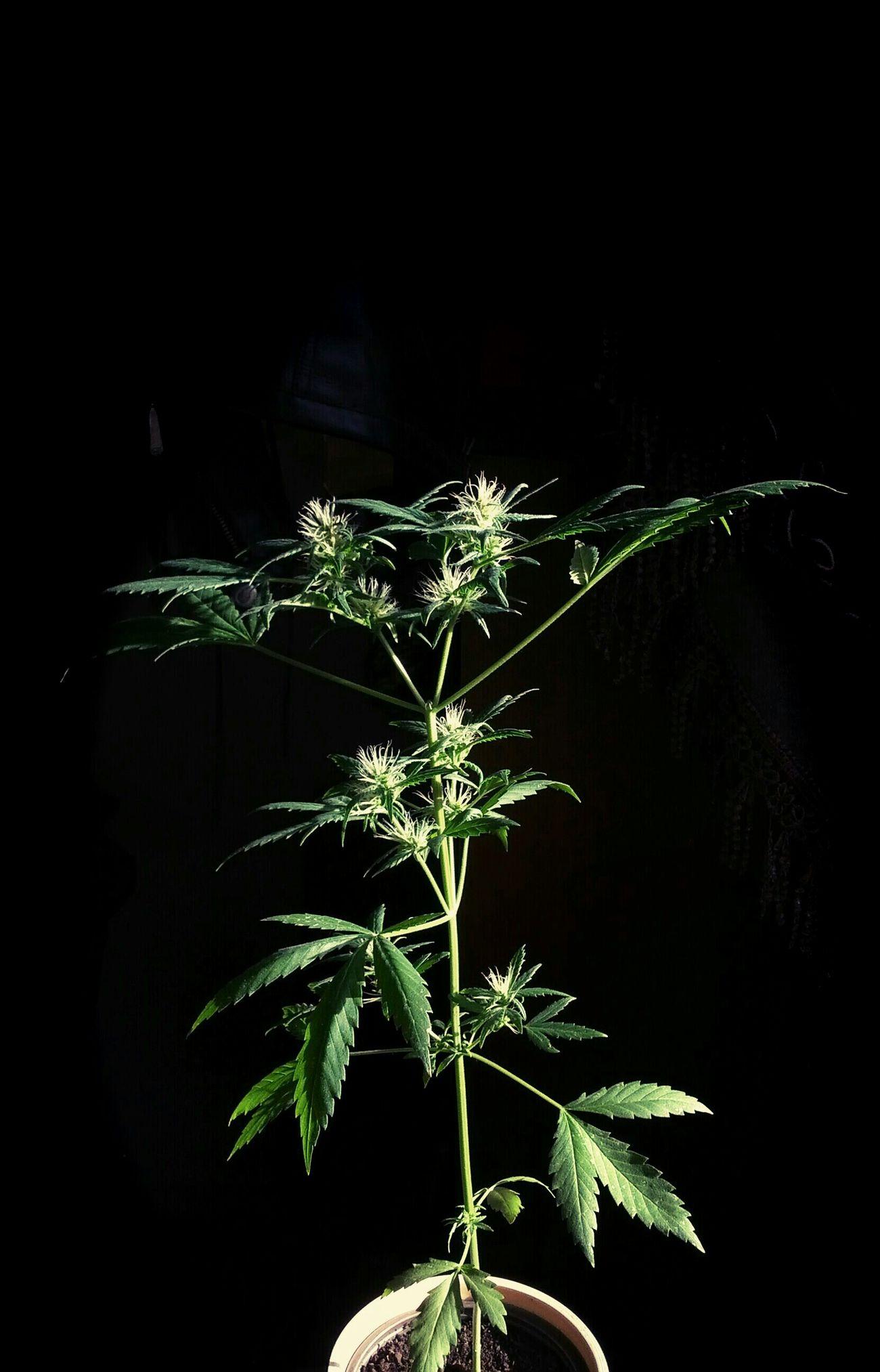 Grow Slow Growing Plants