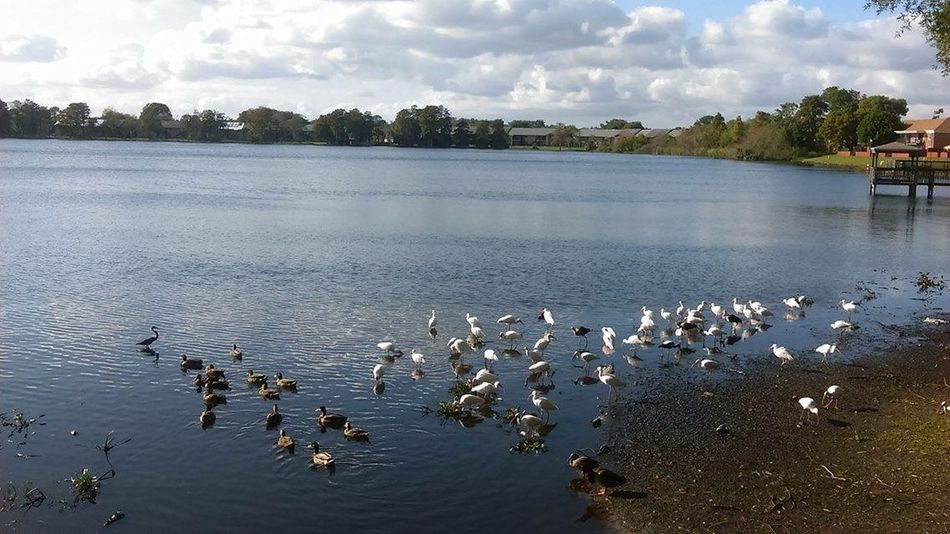 Birds_collection Birdsview Lake Beautiful Showcase: December Florida Sky_collection Clouds Simplyscenic