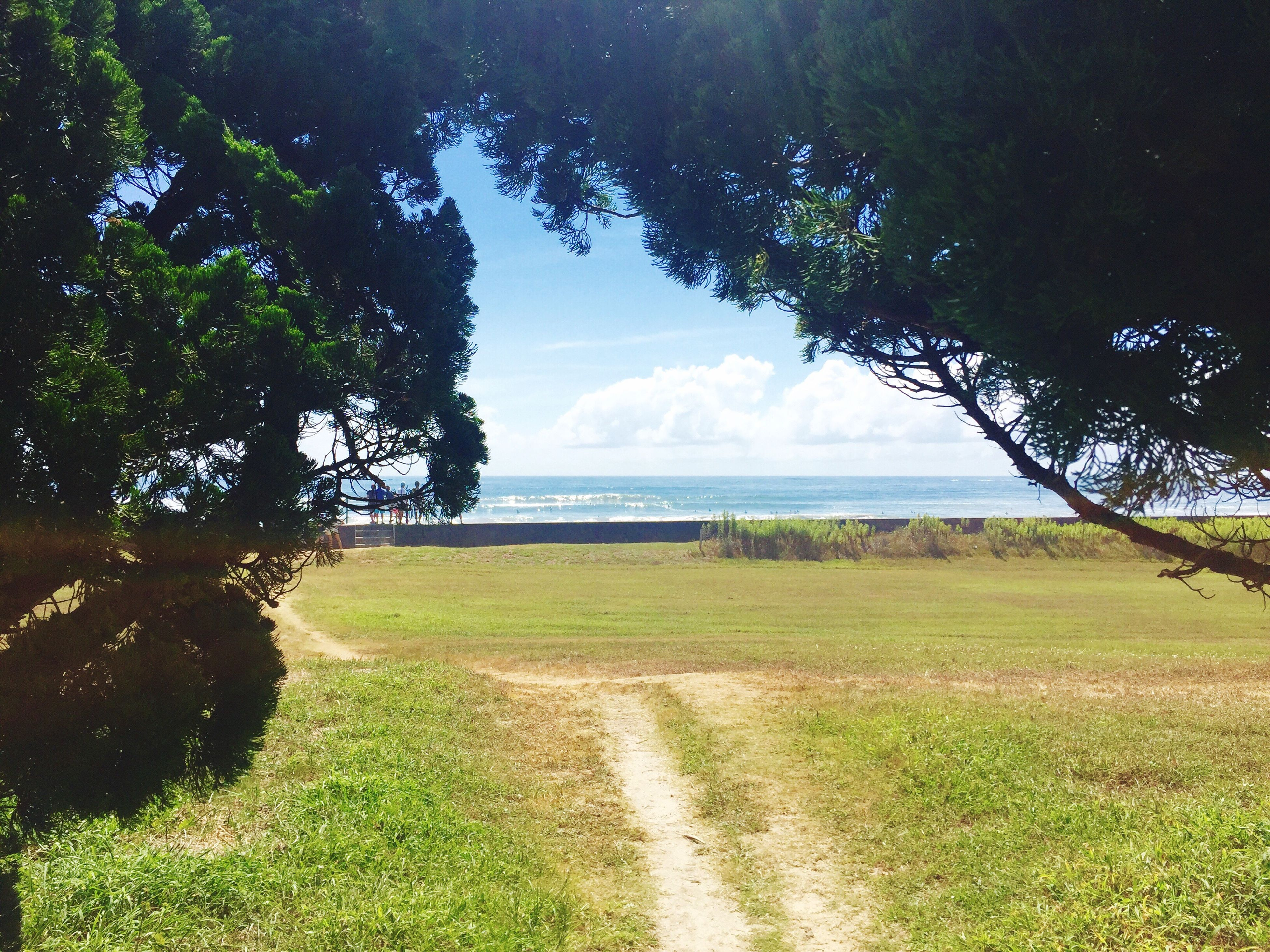 tree, water, sea, sky, tranquil scene, tranquility, grass, horizon over water, scenics, beauty in nature, green color, growth, nature, footpath, non-urban scene, day, cloud - sky, cloud, sunny, remote, lawn, the way forward, outdoors, distant, green