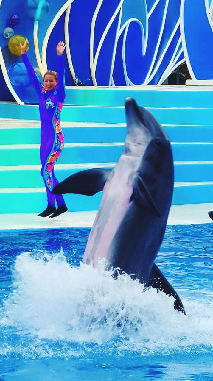water, blue, dolphin, full length, day, outdoors, jumping, sea, swimming pool, no people, mammal