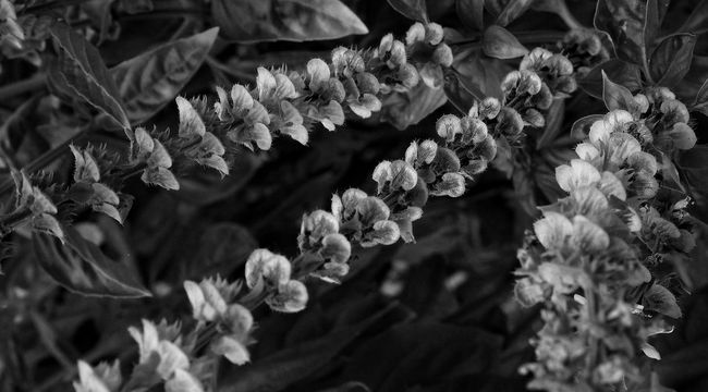 Floral Patterns Nature Tadaa Community EyeEm Best Shots EyeEm Masterclass Streamzoofamily Eye4photography  EyeEm Nature Lover Blackandwhite Light And Shadow Monochrome