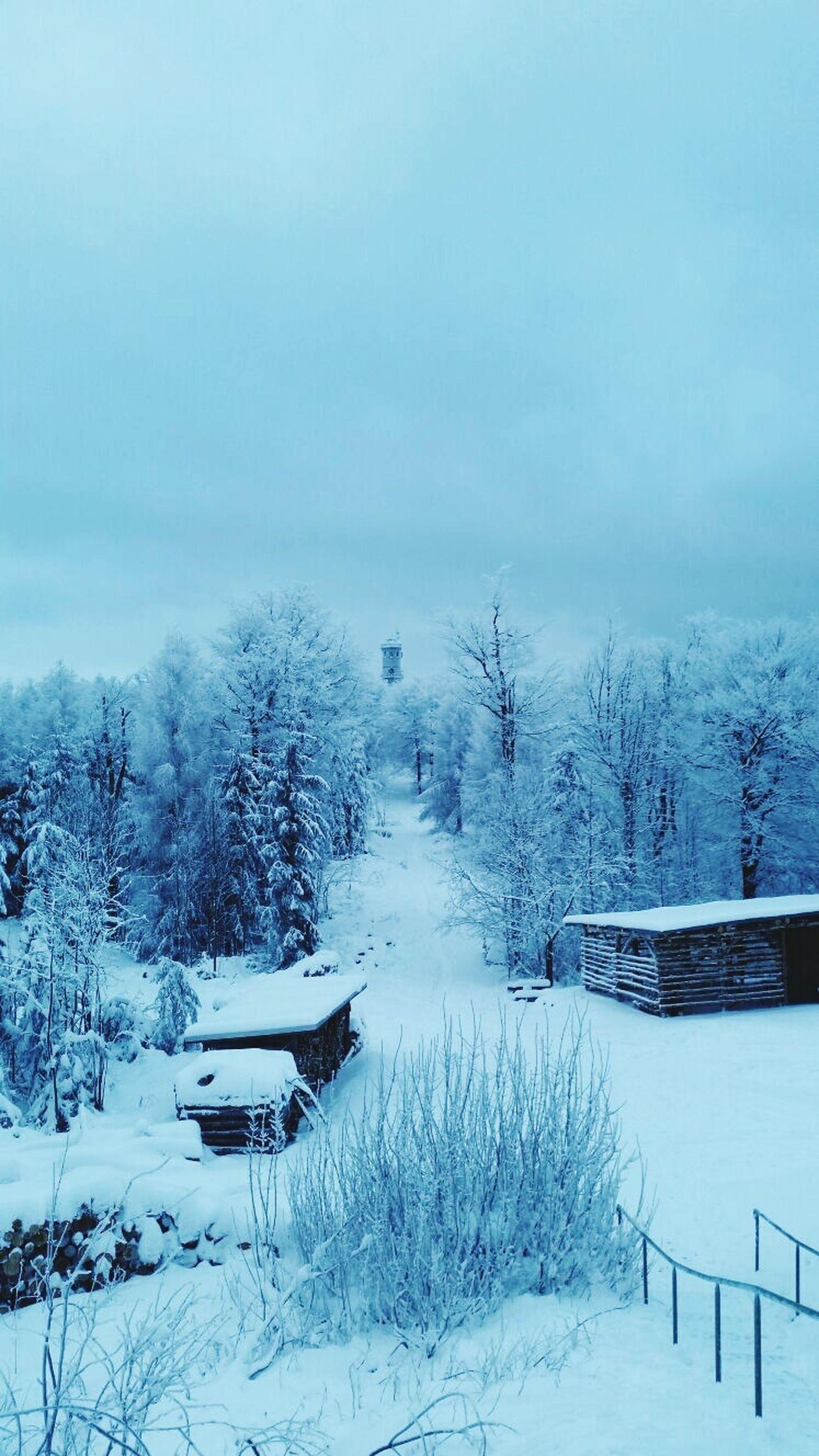Shades Of Blue Winter Trees Winter Winterwonderland Wintertime Germany Winter 2016 Ruhe Ruhe Und Stille Frieden Deutschland. Dein Tag Stille Aufstieg Winterwald Snowing ❄ Snow Snow Day My Best Photo 2015