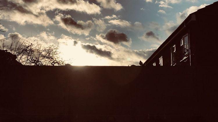 Bird Built Structure Architecture Building Exterior Cloud - Sky Outdoors