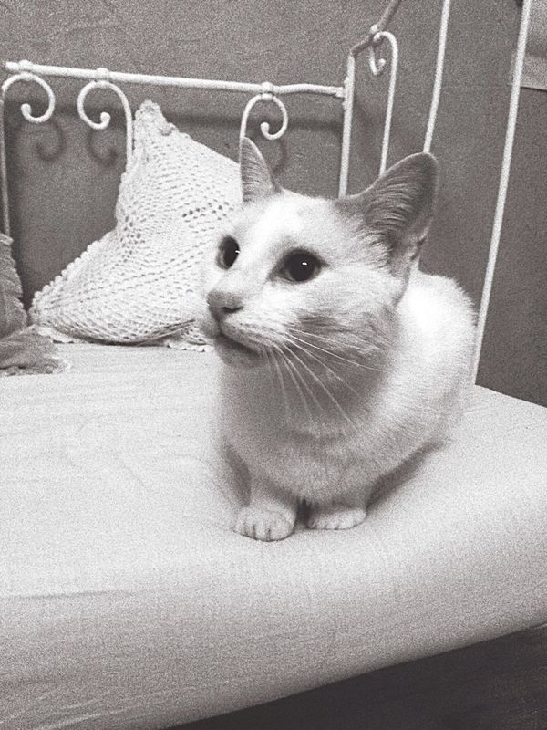 Cat Cats Bbchat Chat Kitty Animals Animal Love Taking Photos Helo World Blackandwhite Lovely