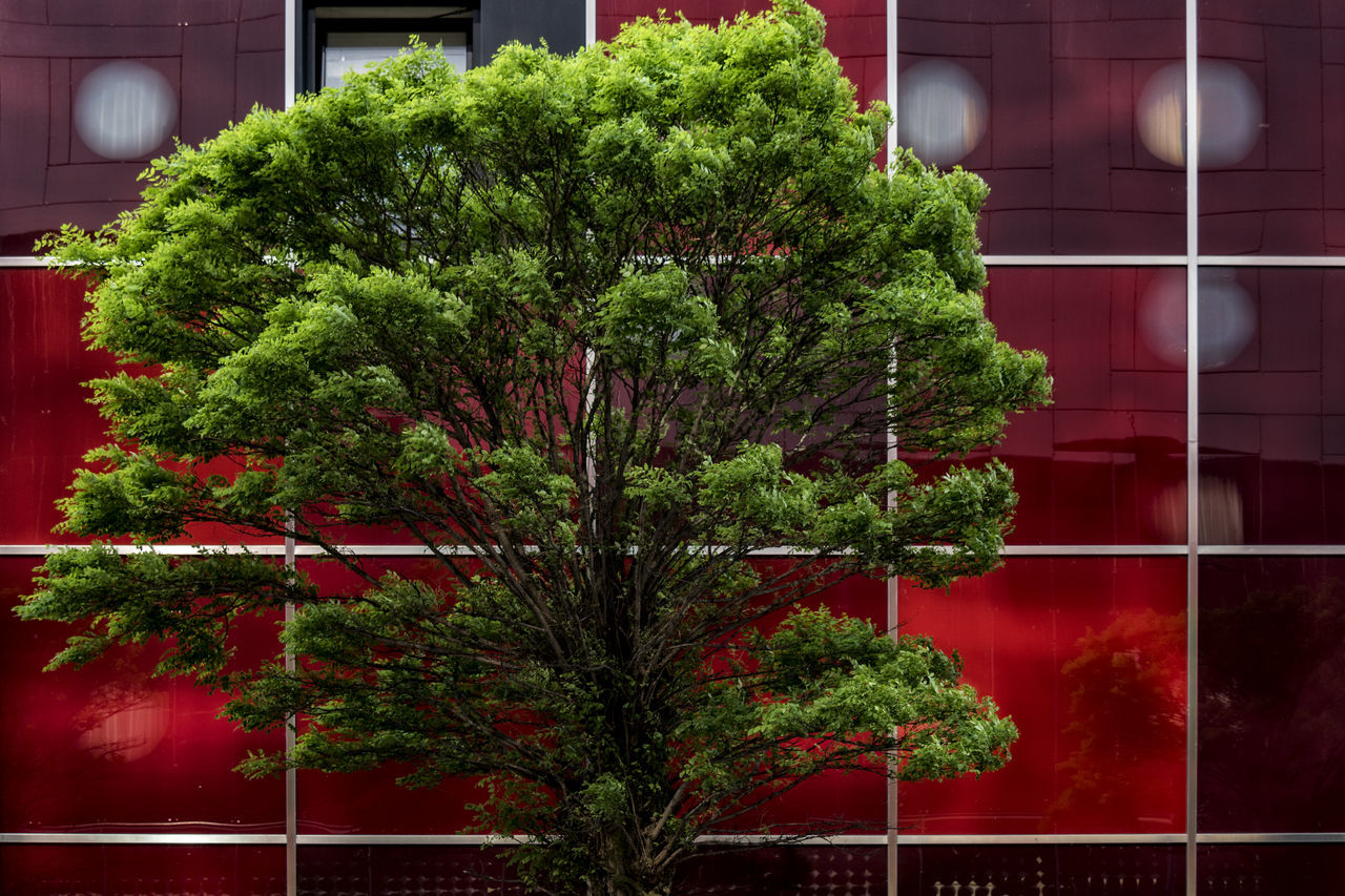 red and green Architecture Branch Building Exterior Built Structure City Close-up Day Green Color Growth Hamburg Nature No People Outdoors Plant Red Reflections In The Glass Windows Tree Window