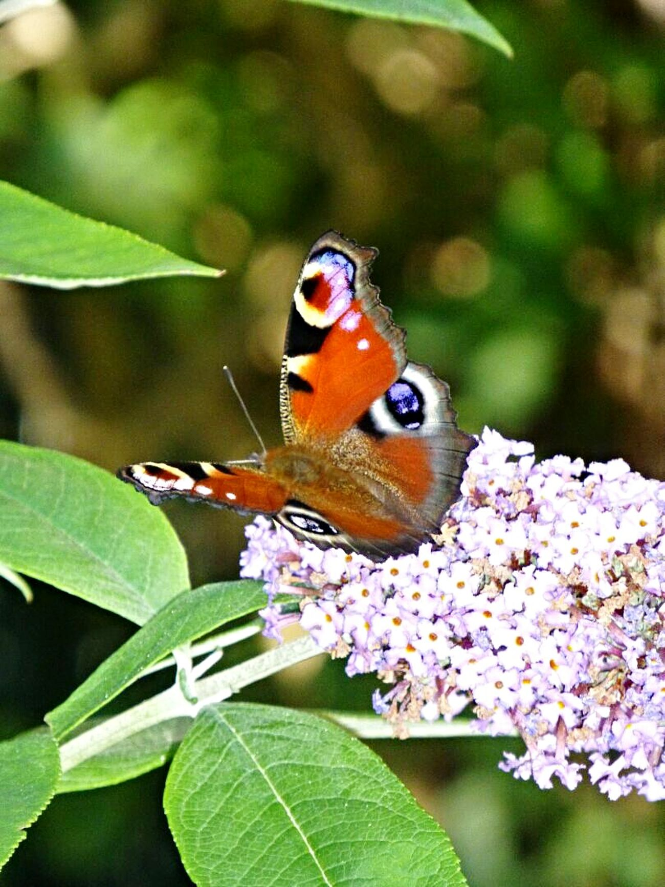 Butterfly SummerComes Check This Out Buyitnow First Eyeem Photo