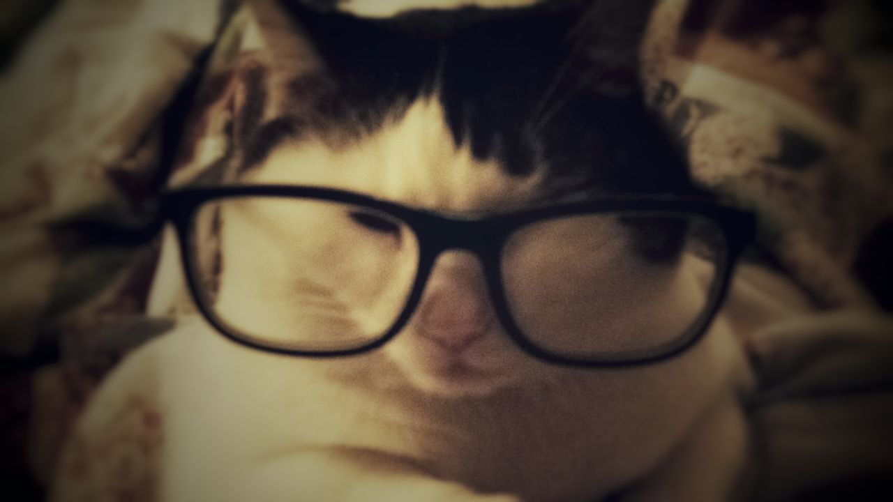 Cats Close-up Contemplation Front View Glasses Intelligent Cat Looking At Camera Portrait Sophisticated