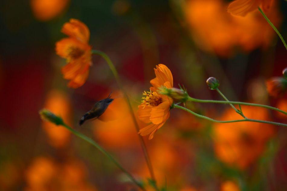 Beautiful stock photos of hummingbird, Animal Themes, Beauty In Nature, Bird, Bud