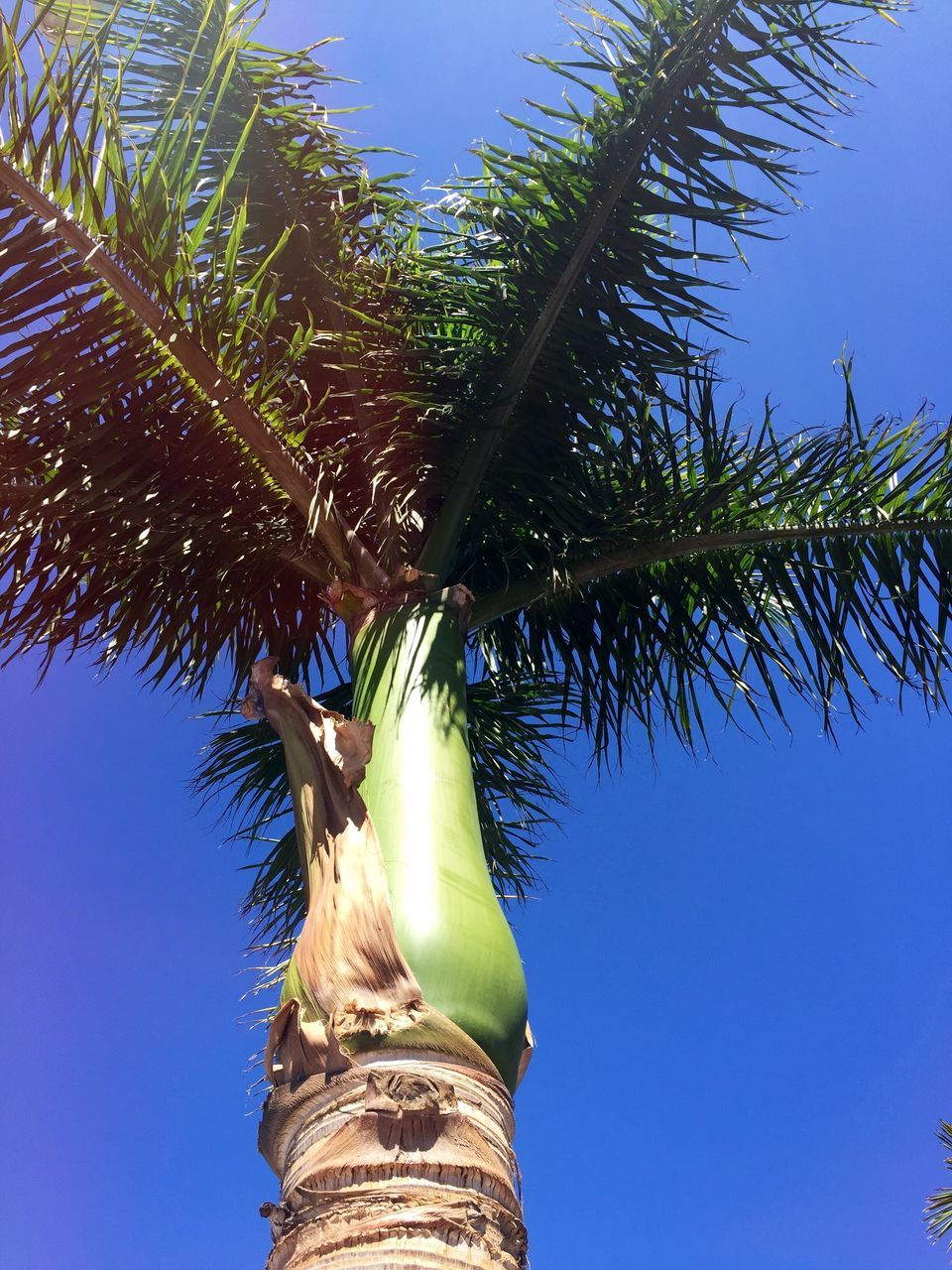 tree, low angle view, blue, growth, statue, day, green color, outdoors, sculpture, palm tree, nature, clear sky, no people, branch, sky, plant, sunlight, tree trunk, beauty in nature, close-up