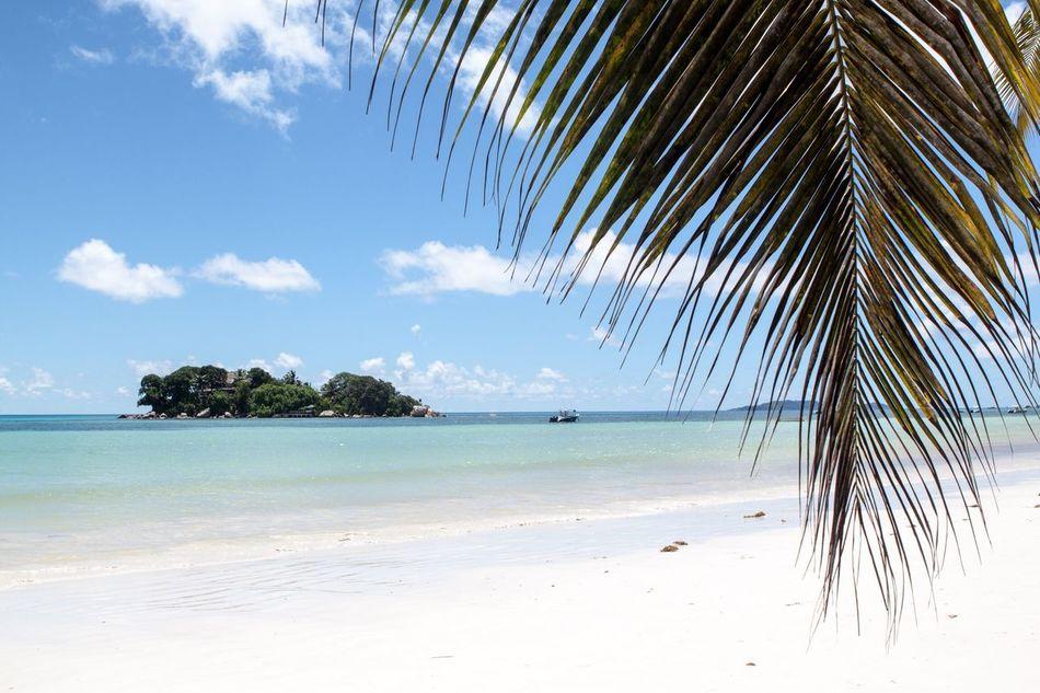 Beautiful stock photos of palm tree, Copy Space, Idyllic, Indian Ocean, Island
