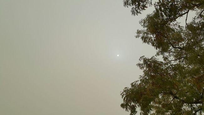 Sunrise Today. Dusty Harmattan Subsahara No Edit/no Filter No Camera Effect No Edit By App Just Pure Jimeta Nigeria People wearing masks, severe haze, sahara advancing, Climatechange