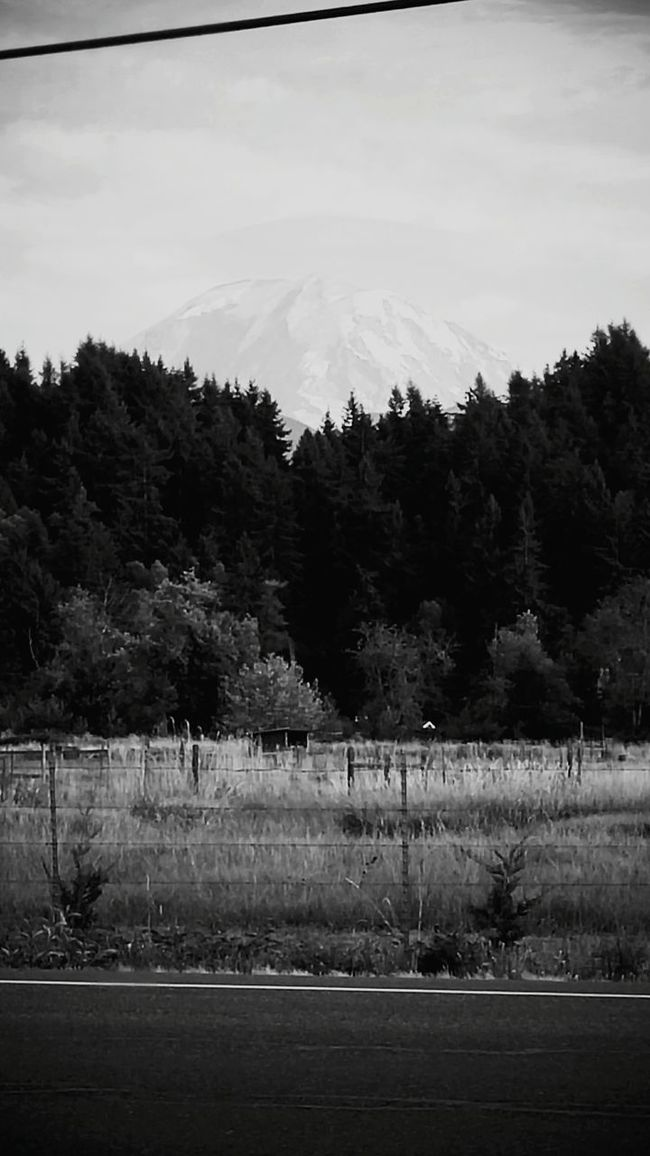 Shades Of Grey Taking Photos Great Outdoors Enjoying Life