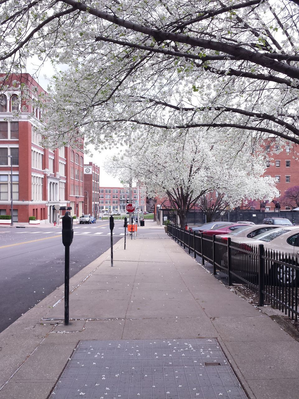 tree, architecture, branch, building exterior, built structure, outdoors, day, road, nature, the way forward, springtime, full length, walkway, flower, city, beauty in nature, no people, sky