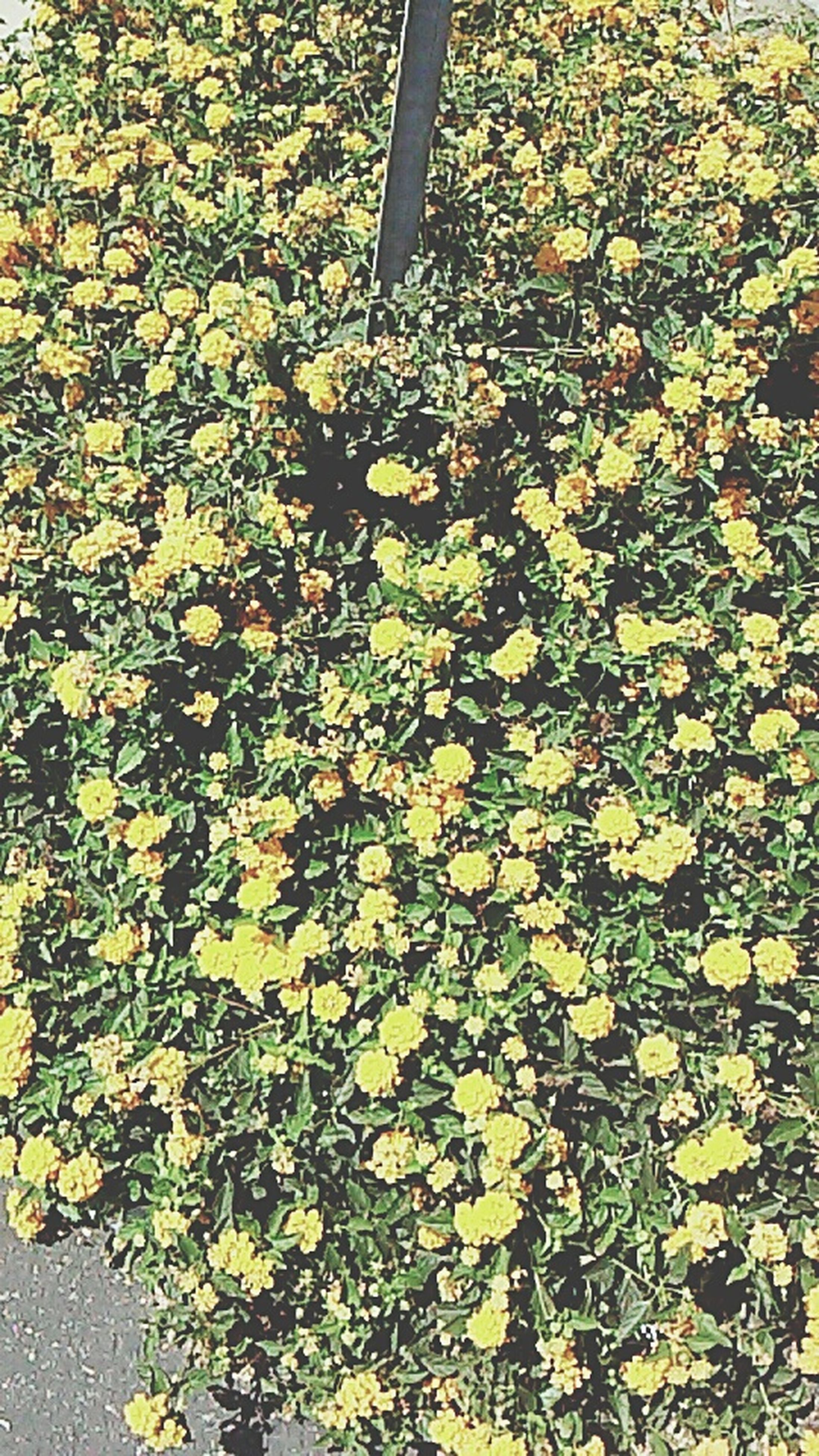 yellow, growth, flower, high angle view, plant, nature, leaf, day, outdoors, sunlight, no people, park - man made space, tree, freshness, beauty in nature, field, autumn, shadow, season, fragility