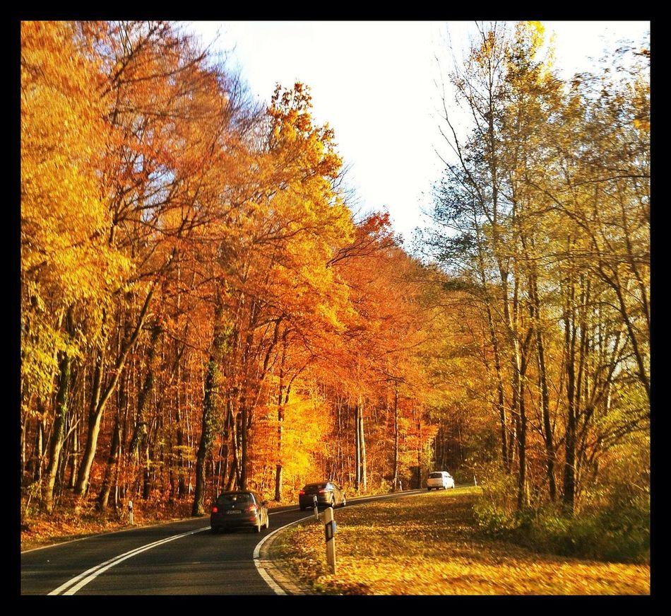 Golden Autumn Forrest Autumn Near And Far
