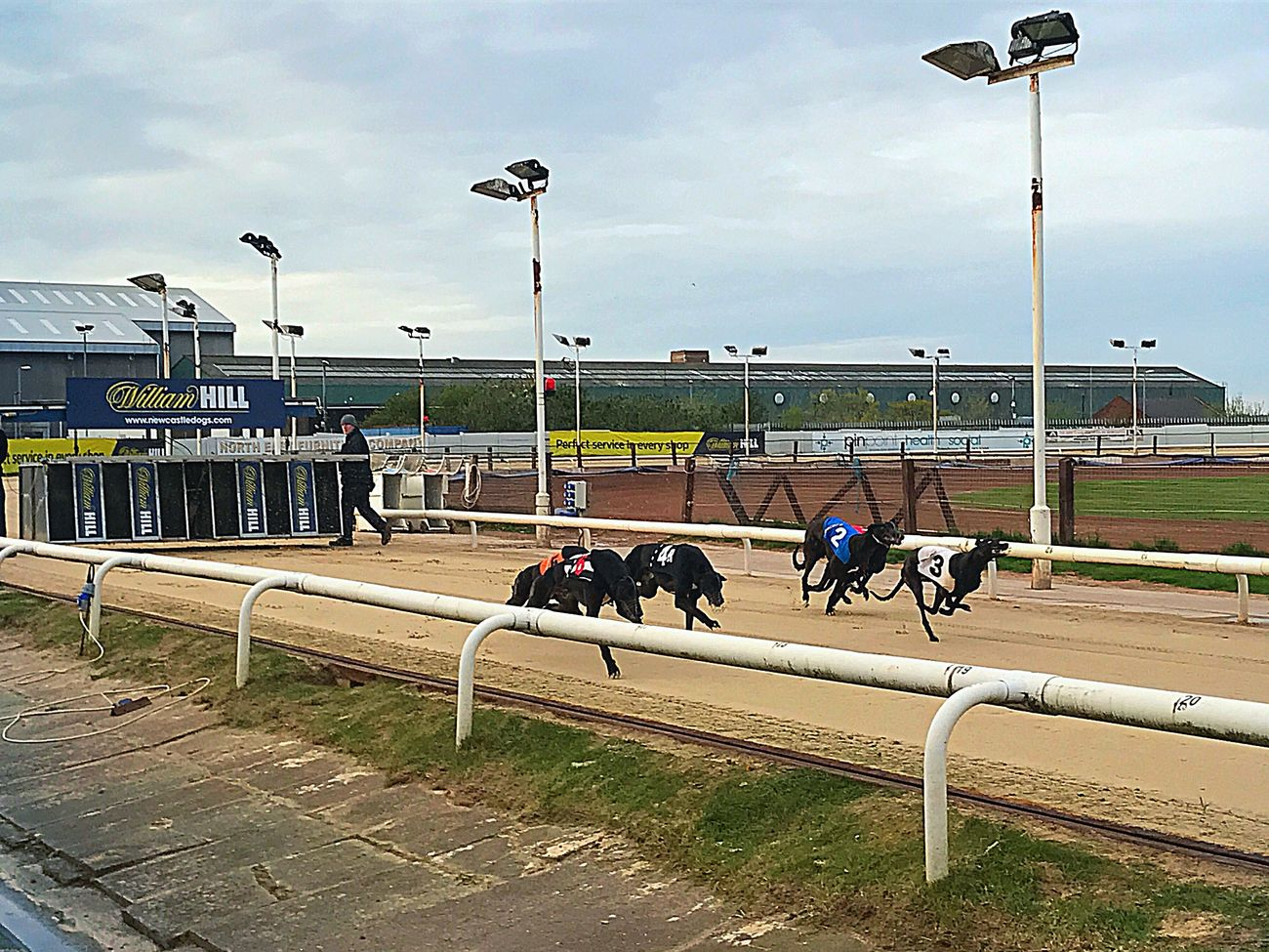 Dog Racing Greyhound Greyhound Racing Outdoors Sports Track Dogs Racetrack Cloud - Sky Day Outdoor Betting Race Running Competition Newcastle Upon Tyne