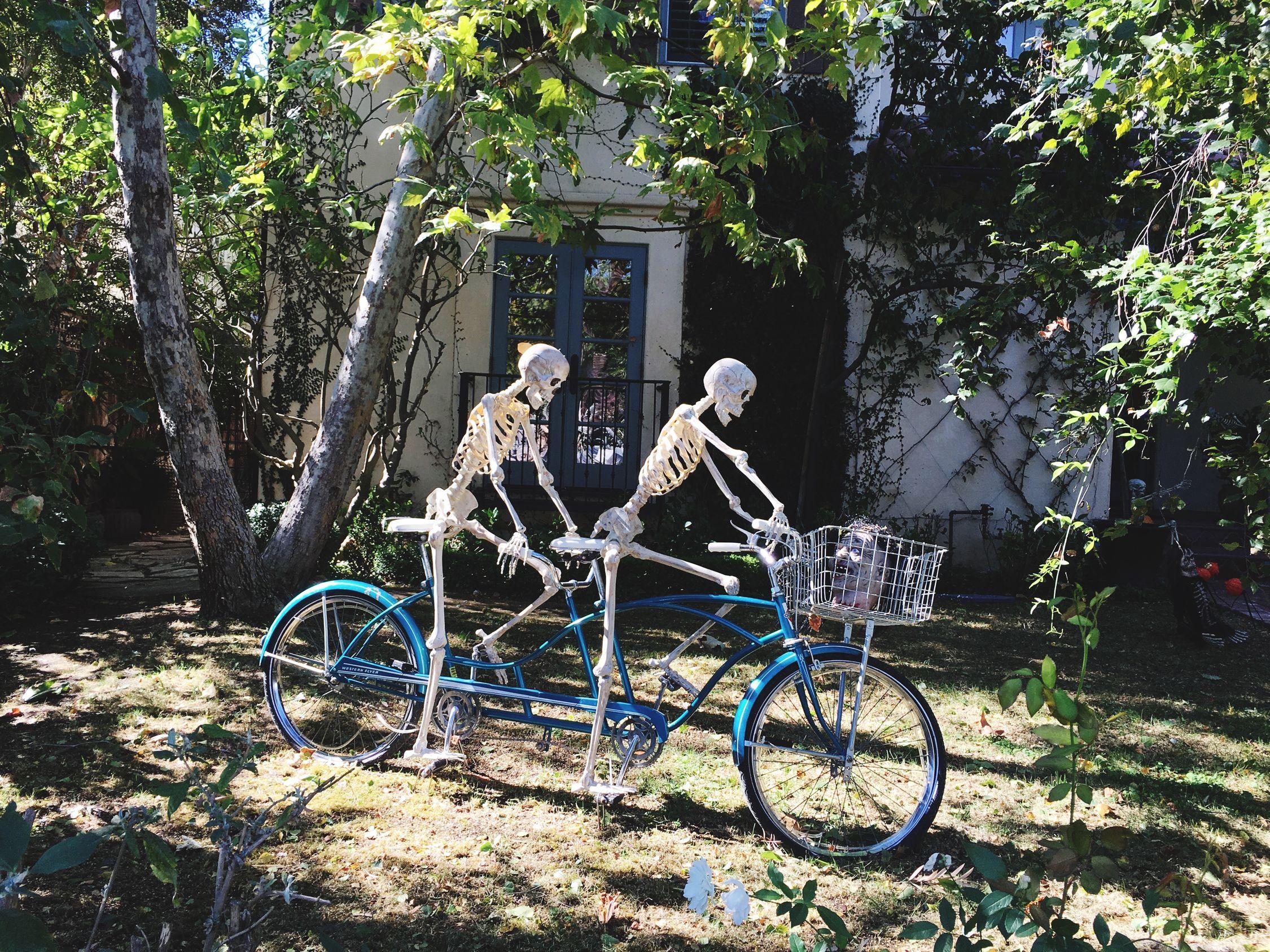 Off We Go! On Your Bike Tandem Skeletons Halloween Fun Happy Halloween!
