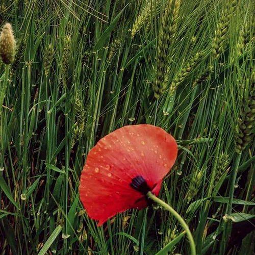 Mik_azentavaszom Mik Ikozosseg Spring Hungary Hungarian Instalike Ig_hun Naturelovers Nature Ptk_nature_challenge Ptk_flowers Flowerporn Flowers Love Lovely Green Photooftheday Like Instagood Insta_hu