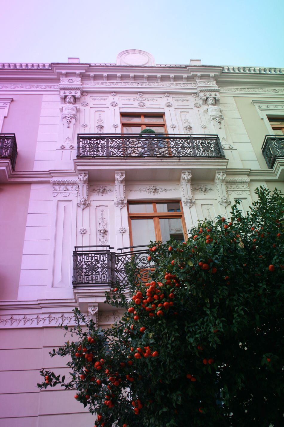 Valencia in spring. Architecture Building Exterior Built Structure City Center Growth Low Angle View Orange Tree Oranges On Tree Tree Valencia, Spain
