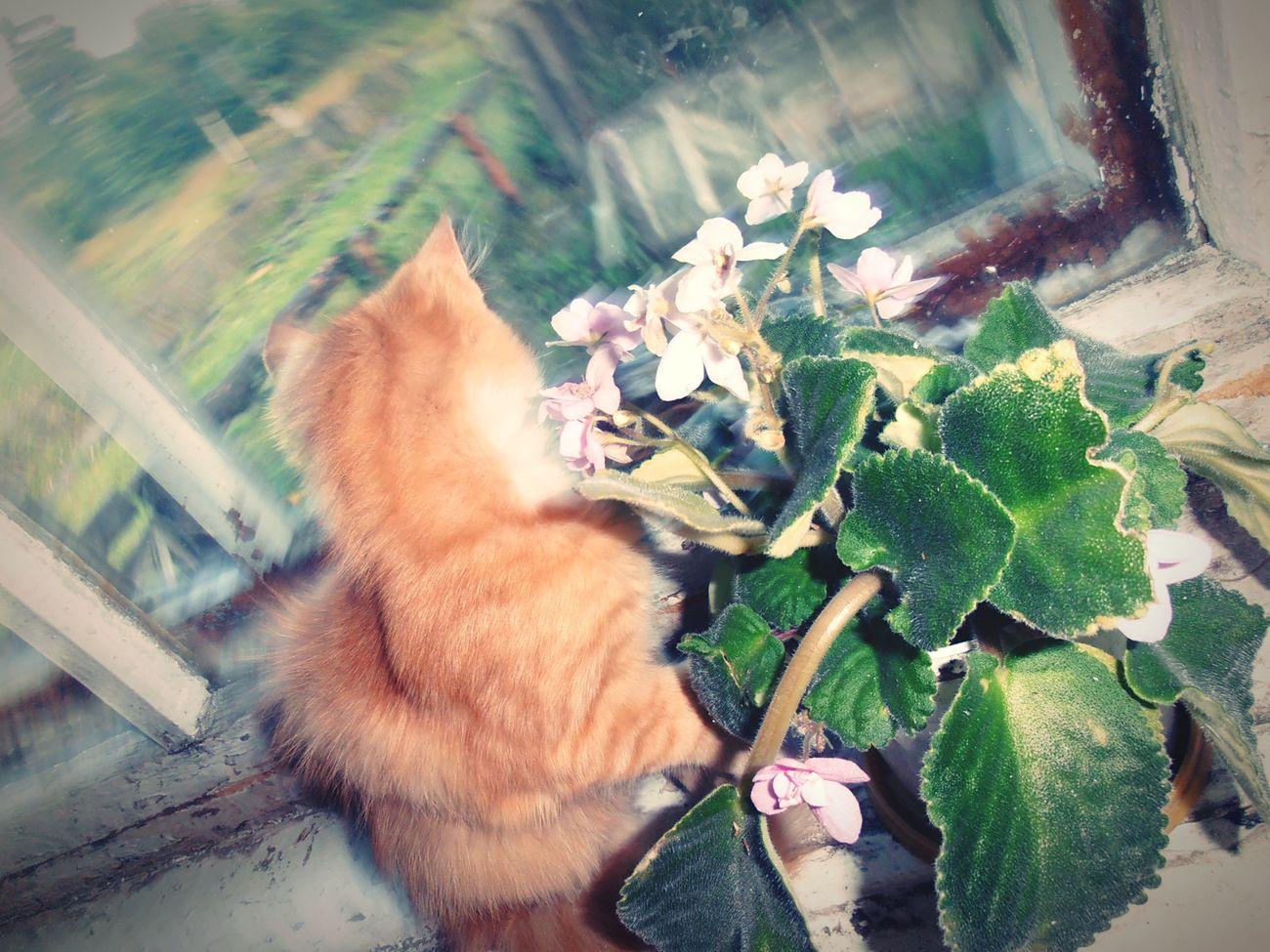 Рыжик и фиалка..Cats 🐱 Kitty Animal_collection Animalphotography рыжий кот Getting Creative котики😻 котик❤️ любимый кот