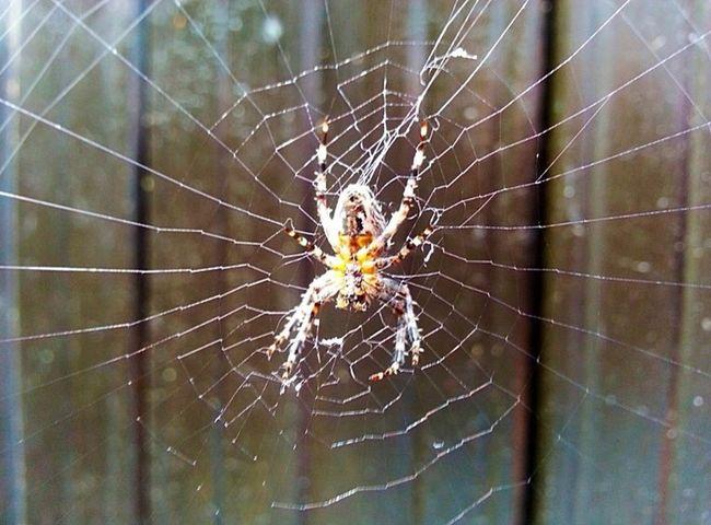 Spider Spider Web Arachnid Arachnid Photography Aracnoid Arachnid_perfection Spider Nature_collection Eyenaturelover Macro_collection