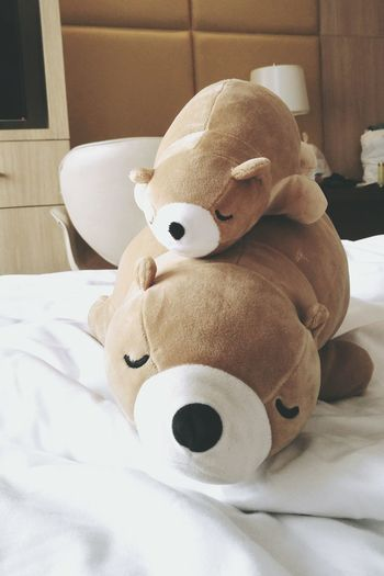 butter and baby butter 💙 Bears Stuffed Toy Teddy Bear Bedroom Hotelroom Bears Life  Family Bangkok Thailand.