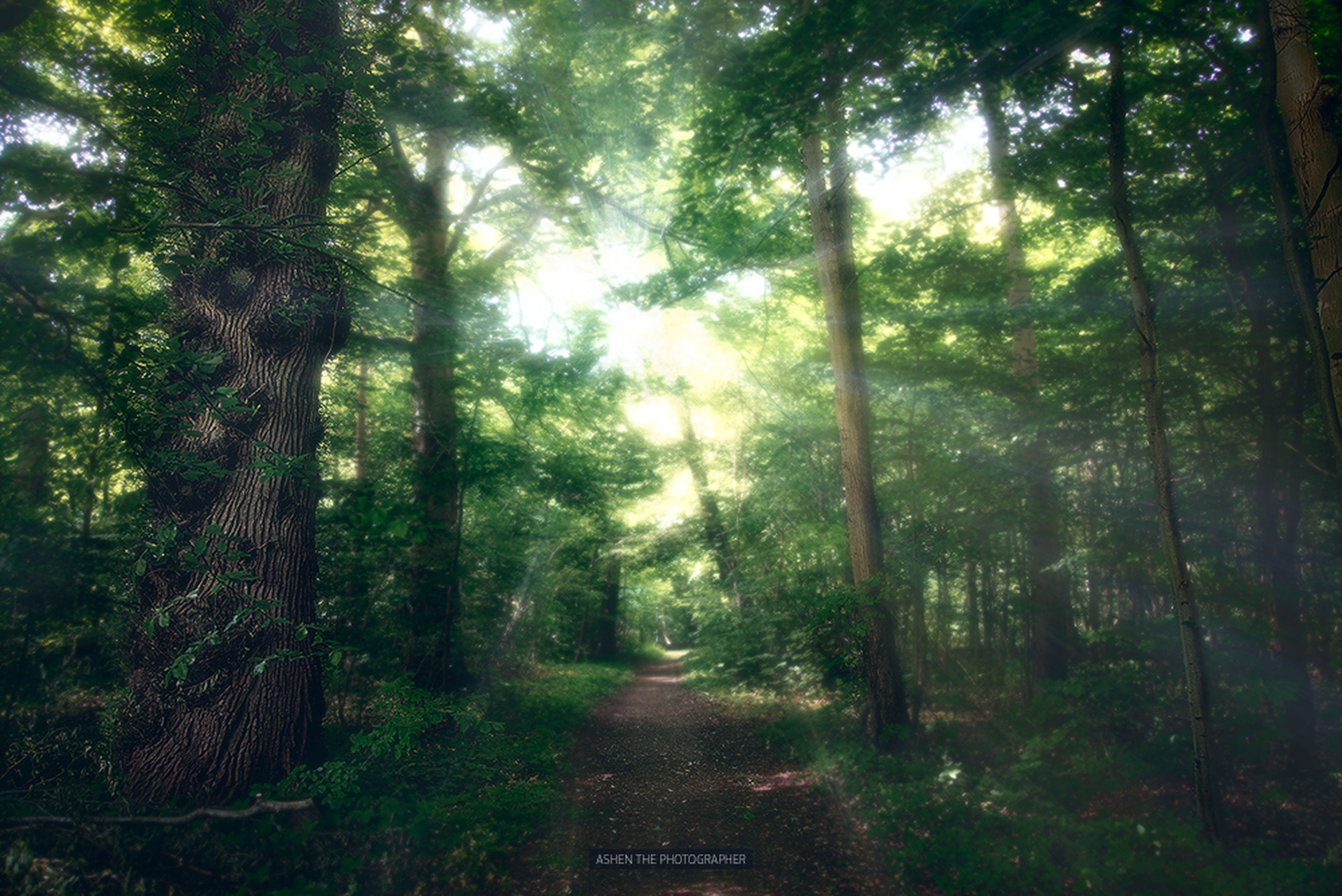tree, the way forward, forest, growth, tranquility, tree trunk, woodland, nature, diminishing perspective, tranquil scene, vanishing point, beauty in nature, green color, footpath, scenics, non-urban scene, outdoors, day, lush foliage, treelined, no people, idyllic, narrow, landscape, empty, travel destinations, remote