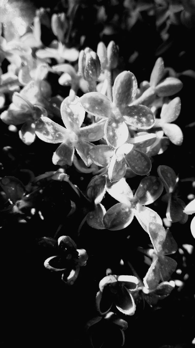 Black And White Collection  Blackandwhite Black And White Black & White Flowers, Nature And Beauty Flower Collection Flowers Hello World Glicine