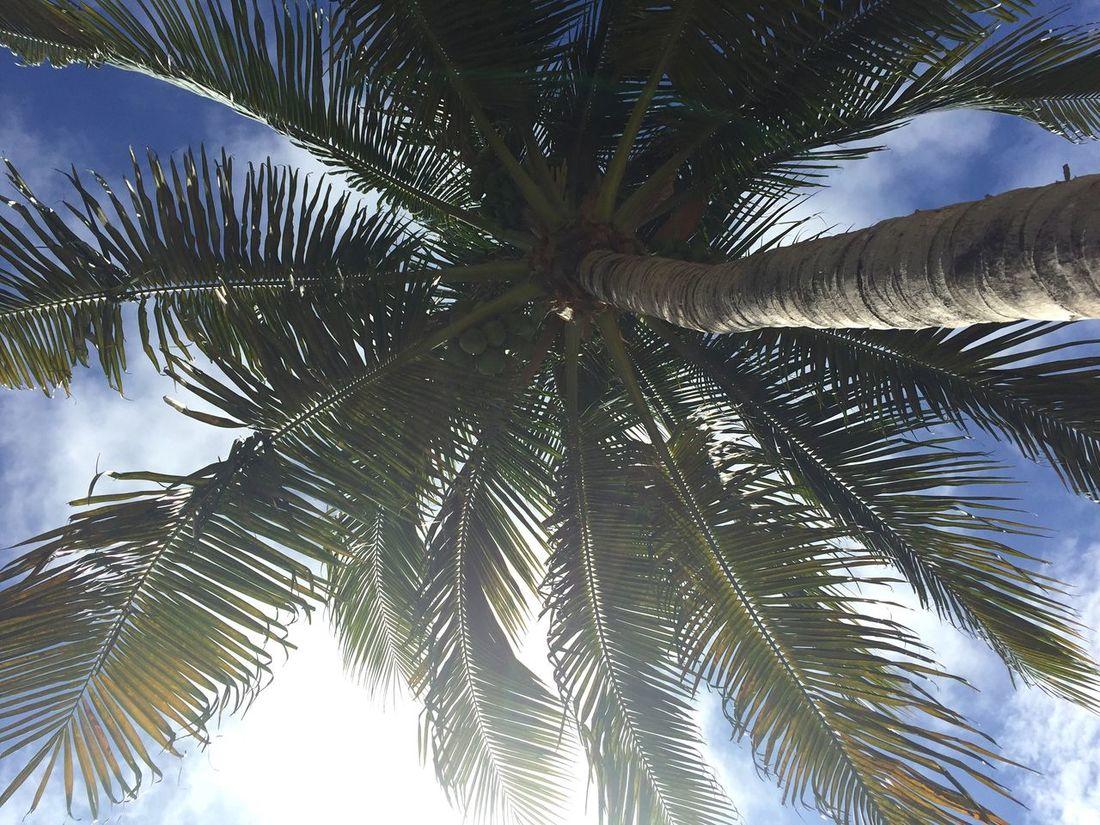 Palm Palm Tree Palm Tree Leaves Under The Palm Tree Foliage Leafage Shadow Summer Flora Tree Plant Warm Sunny Sunny Day Blue Sky Tropical
