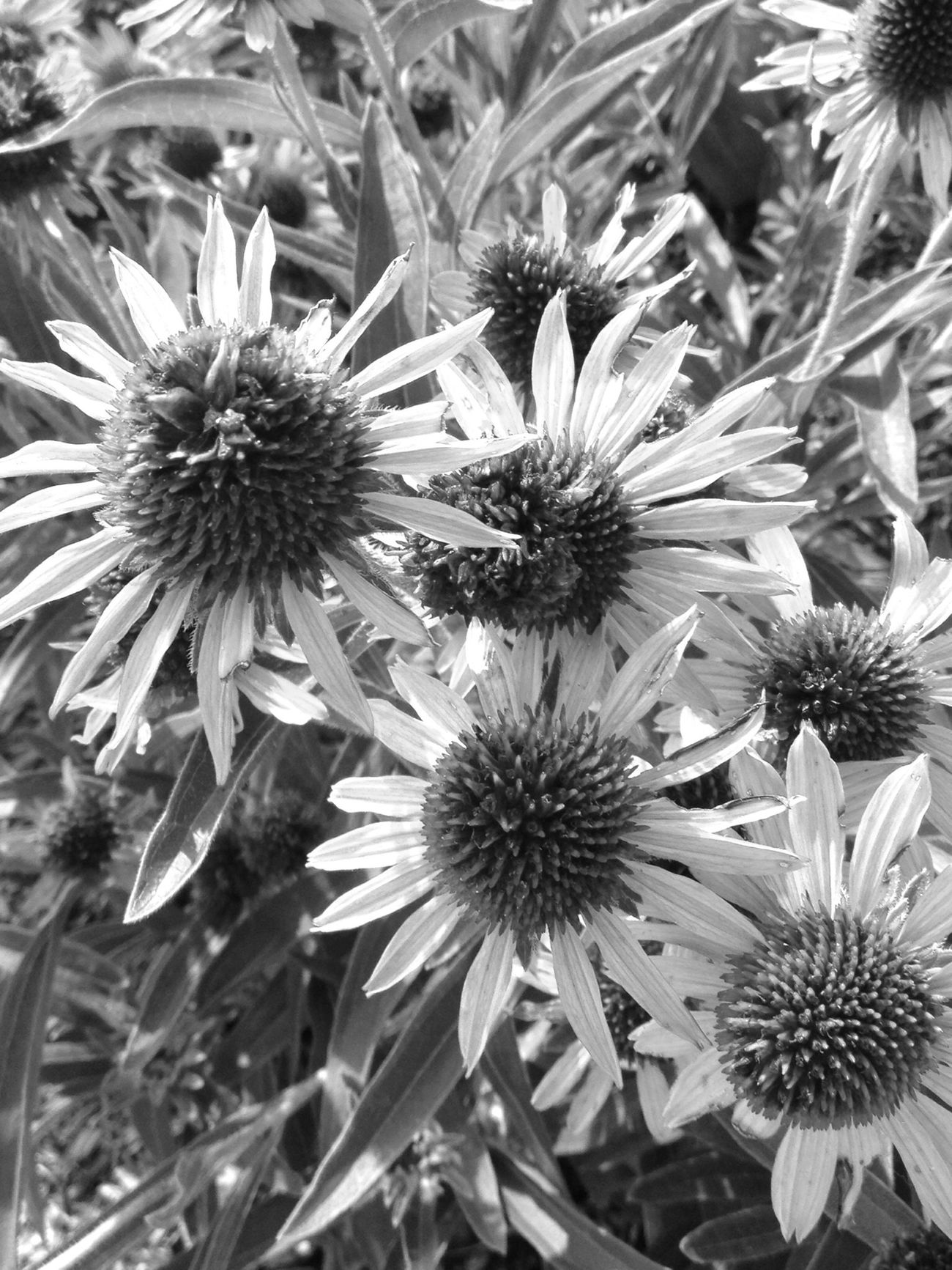 Eyeembestshots - Black + White Nature Black&white Flowers, Nature And Beauty AMPt - Still Life (Nature Morte)