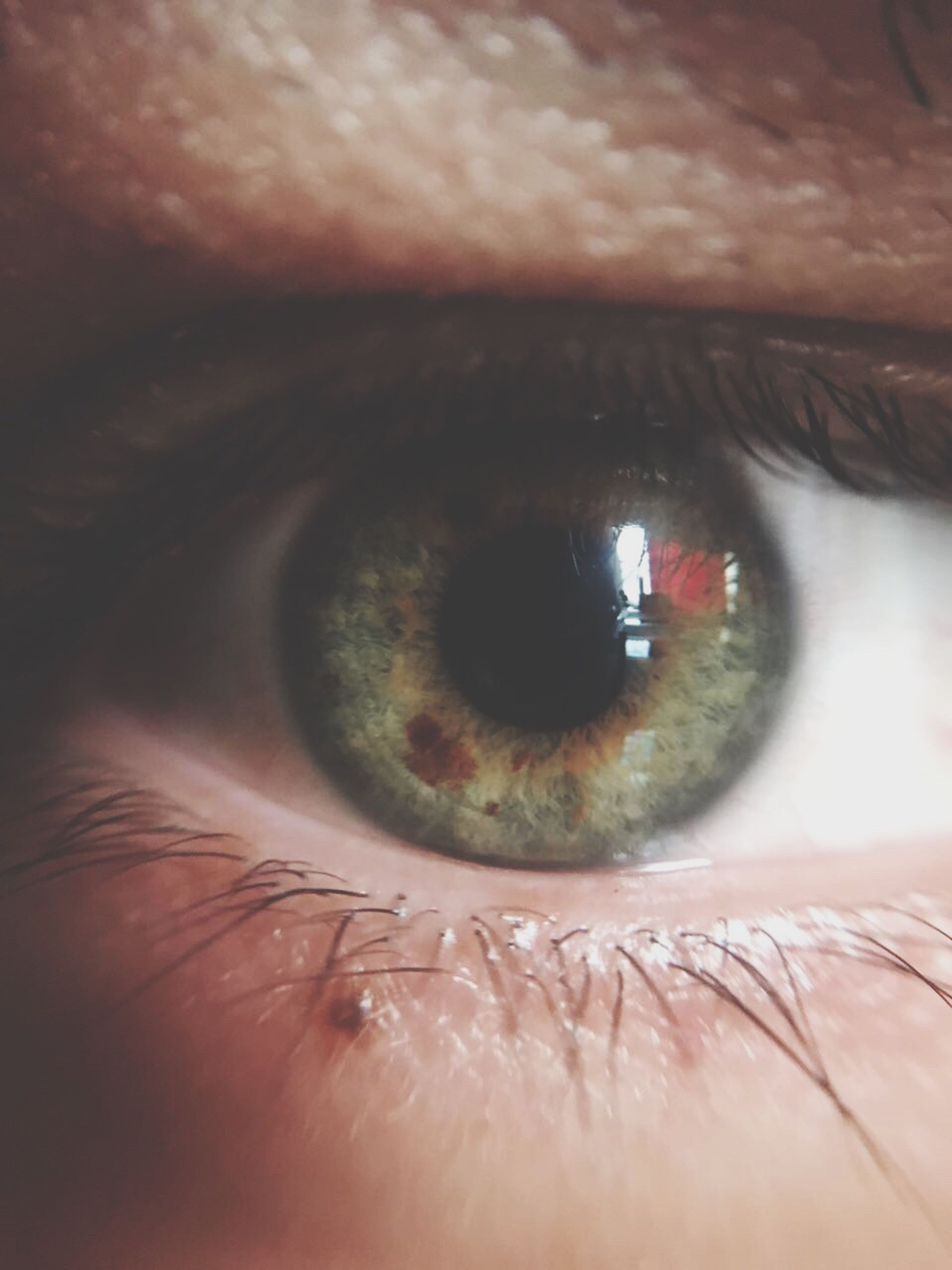 human eye, human body part, eyesight, sensory perception, macro, close-up, real people, eyelash, iris - eye, one person, eyeball, portrait, backgrounds, indoors, vision, people, day, adult