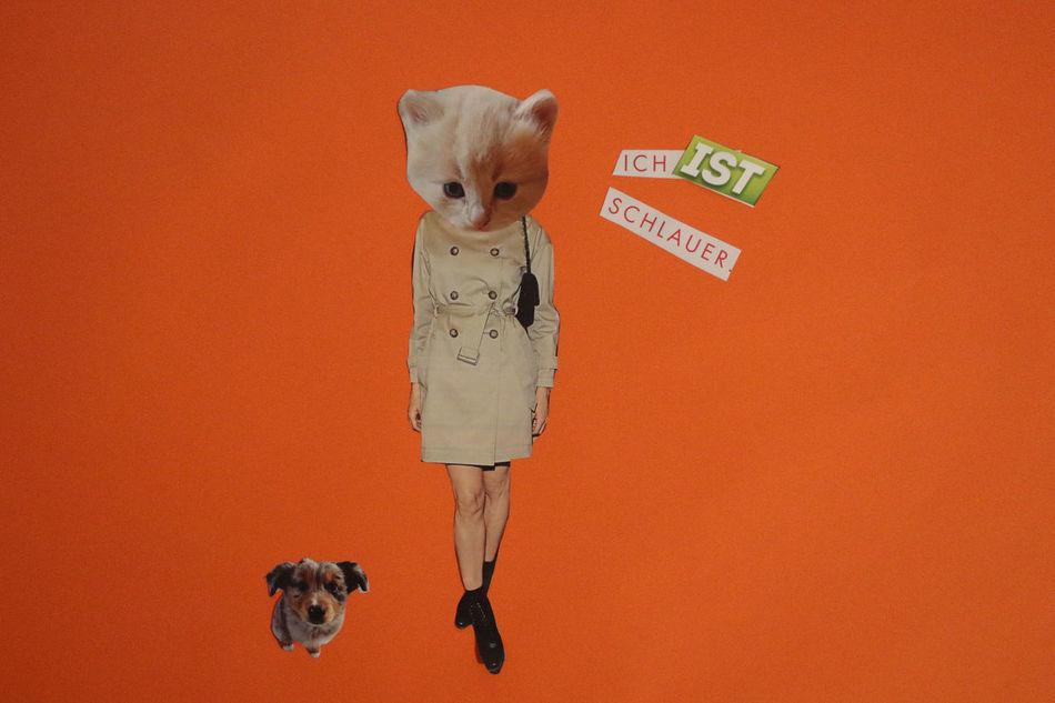 Angela Merkel Animal Themes Cat Cats Collage Craft Dog Domestic Animals Egg Funny Handmade Human Magic Mashup Orange Paper Paper Craft Pet Pets Politic Politics President Red Satire Studio Shot Cut And Paste