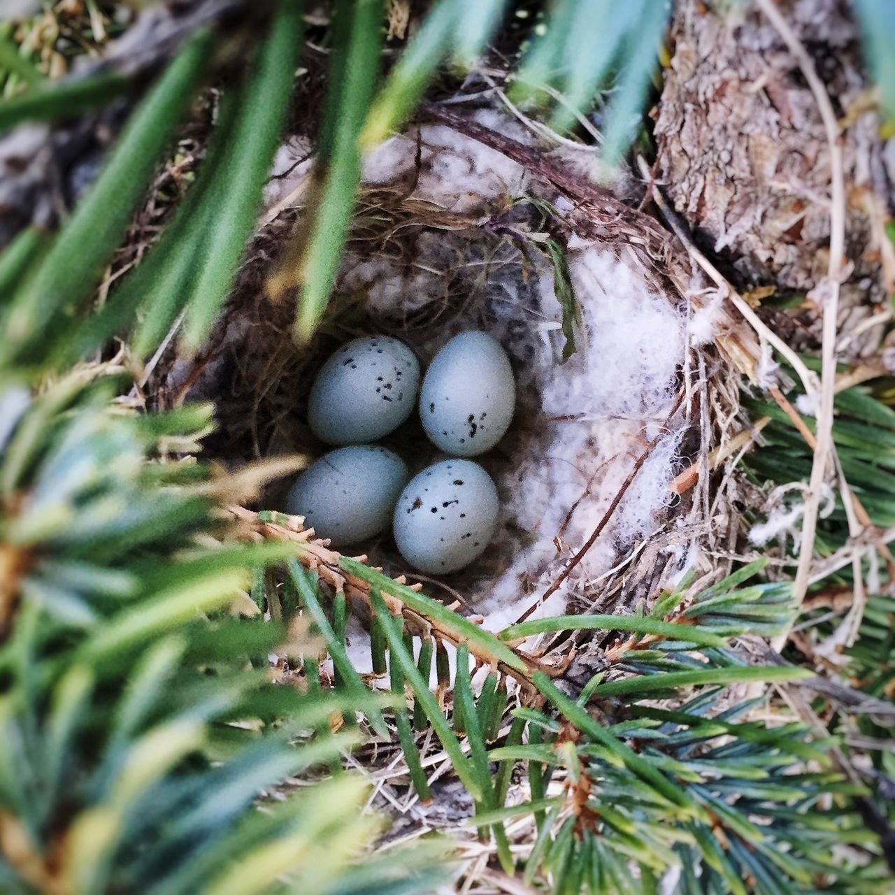 New neighbors in our parts. Birdsnest Nature Eggs