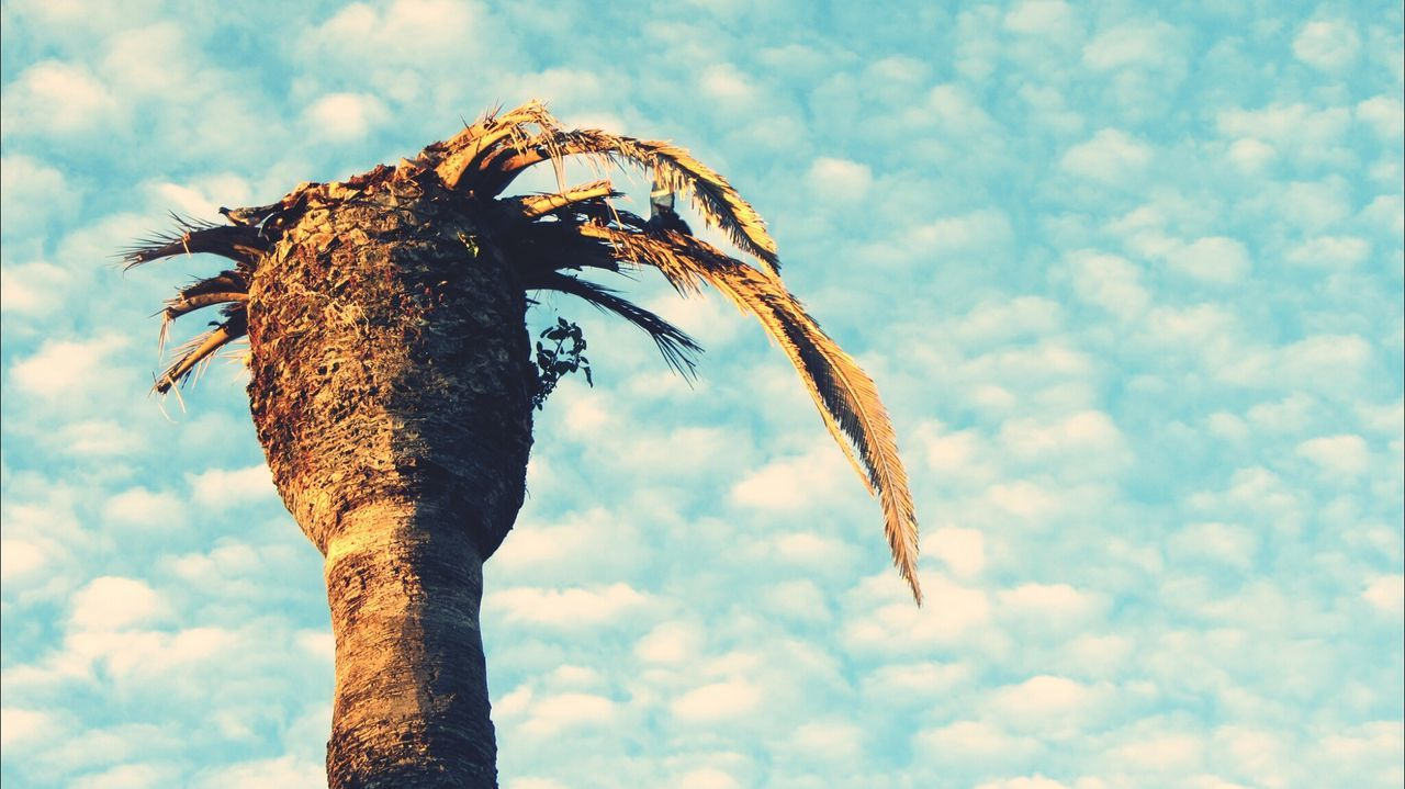 The sky and the palm tree... Palm Tree Taking Photos Walking Around Eye For Photography Outdoors Nature Cloud - Sky Clouds And Sky Palmtree Palm Tree Trunk Palm Tree And Sky
