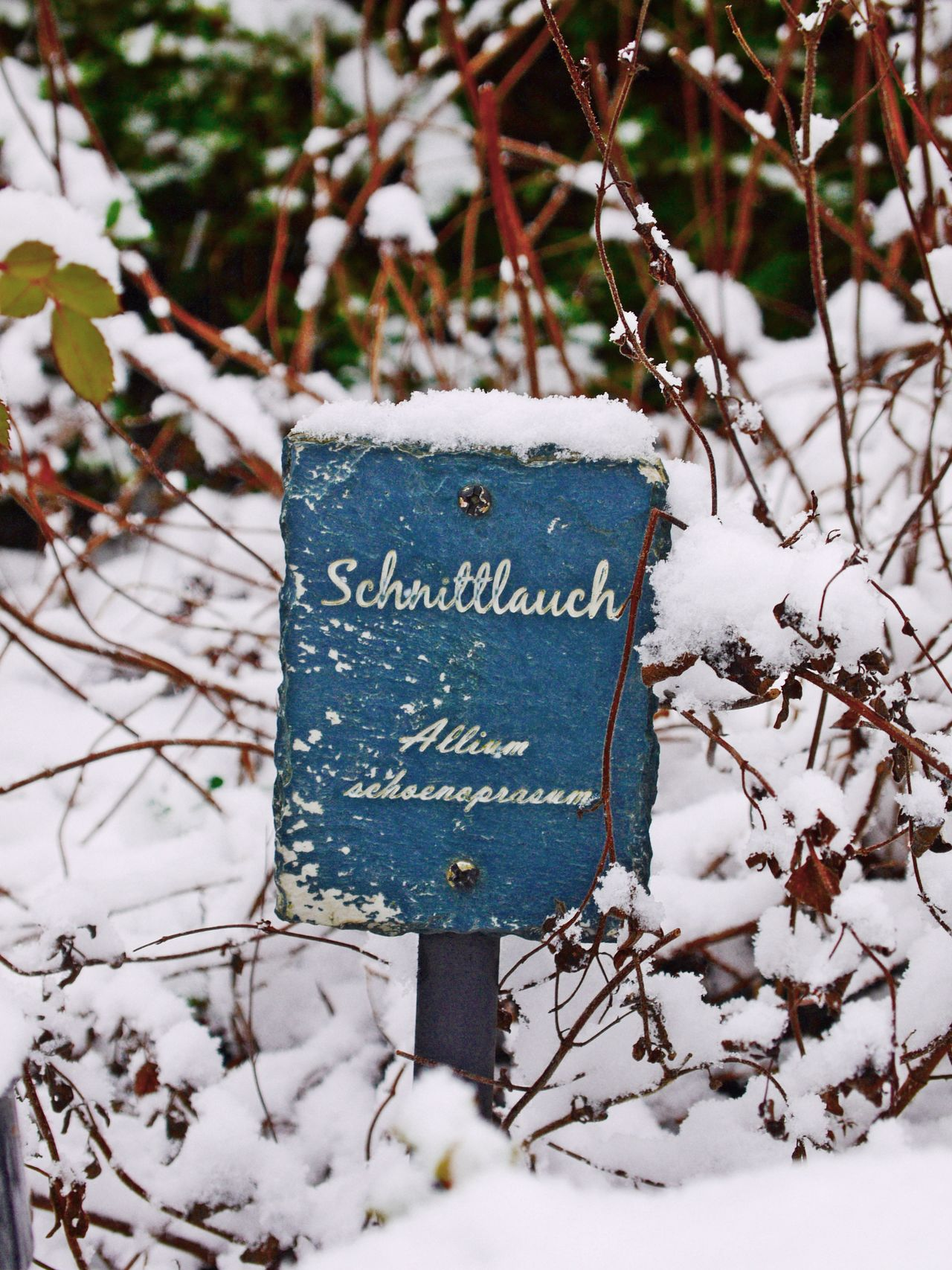 Close-up Cold Temperature Day Forest Herbal Garden Nature No People Outdoors Plant Schnittlauch Signboard Snow Text Tree Winter